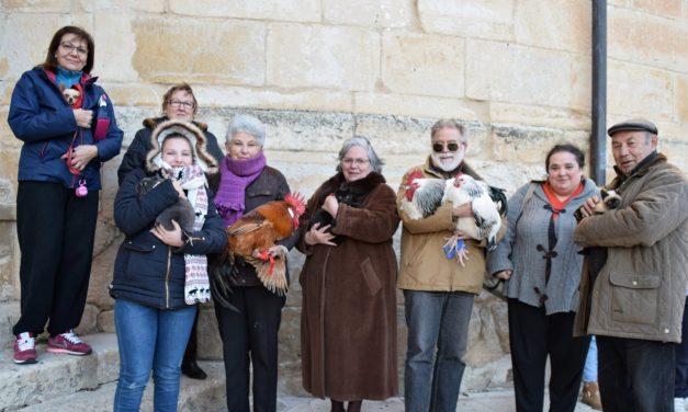 Bendición Animales San Antón