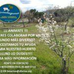 Colabora en el huerto de la Residencia Afanias Torrelaguna