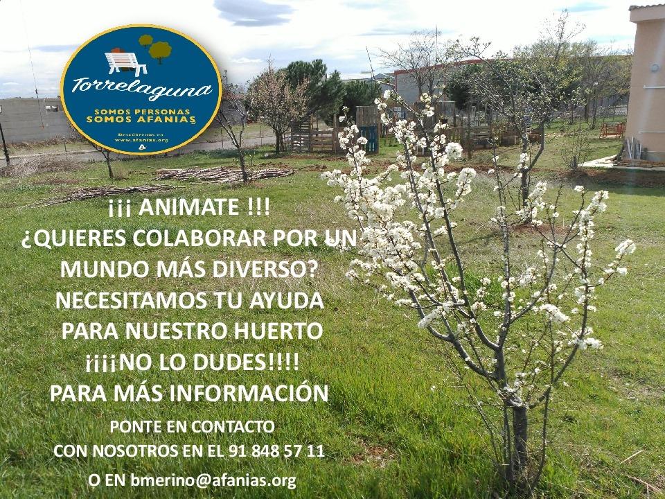 Colabora en el huerto Afanias Torrelaguna