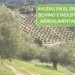 Ayudas destinadas a los sectores del ganado bovino e industrias agroalimentarias