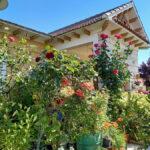 Ganadores del I Concurso de Fachadas, Balcones y Escaparates floridos 2021